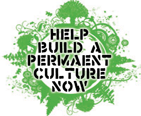 help-us-build-a-permanent-culture-now