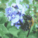 Film: Bees and Permaculture Article – Brigit Strawbridge