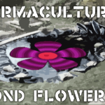Experimental permaculture: The pond flower