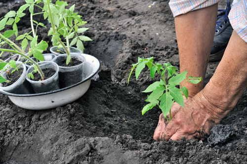 A few tips to help you start a vegetable garden