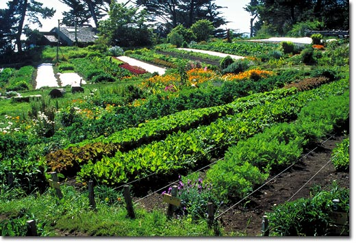 Permaculture as a revolutionary force for change