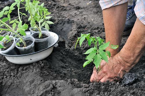 A few tips to help you start a vegetable garden