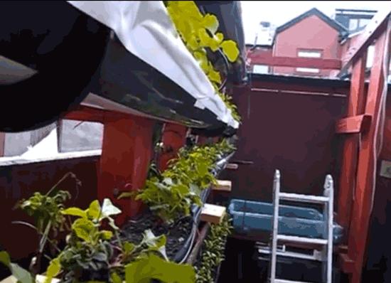 Film: Vertical Gardening